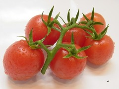 R0051107_ミディトマトルビーノの収穫_20120712
