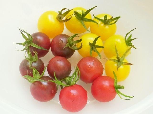 R0057508_ミニトマト収穫_20130728