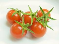 R0061482_プチミニトマトの収穫_20140720