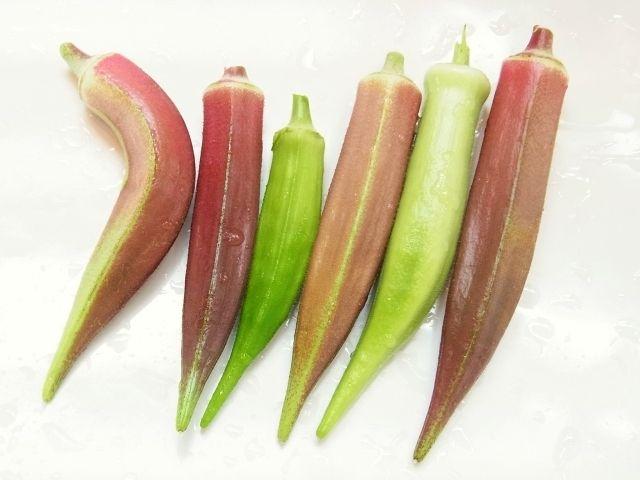 R0052432_赤白緑のオクラ収穫_20120825