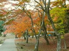 R0059146_修善寺自然公園_20131201