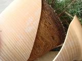 DSC04713_ローズマリーのものすごい根