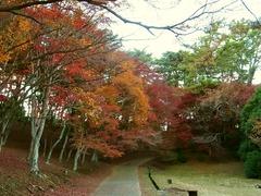 R0059148_修善寺自然公園_20131201