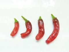 R0052205_鷹の爪唐辛子の赤い実収穫_20120818