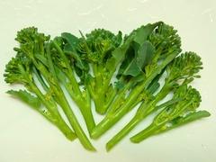 R0029832_ブロッコリー収穫_20110130