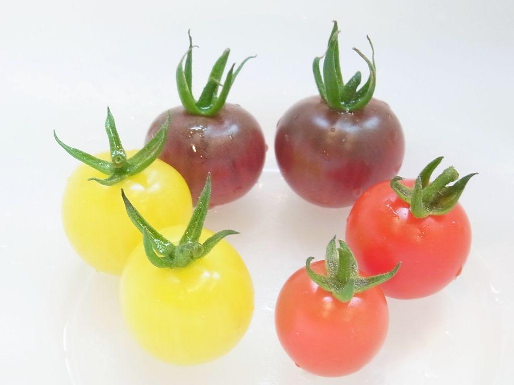 R0056962_カラフルミニトマトの収穫_20130629