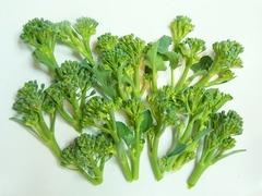 R0040489_ブロッコリー収穫_20110301