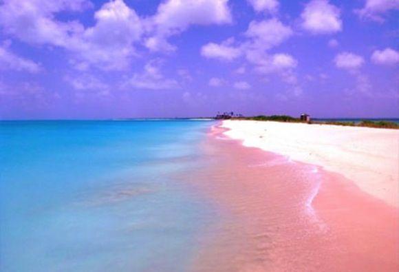 Image result for ピンクの海 メキシコ