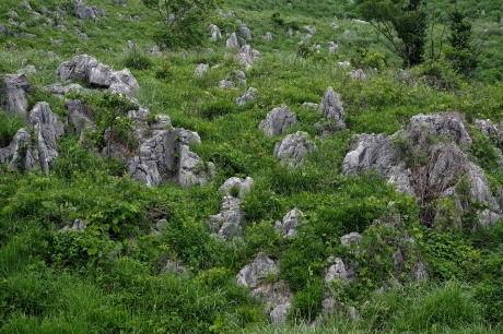 緑と石のコントラストでしょうか?
