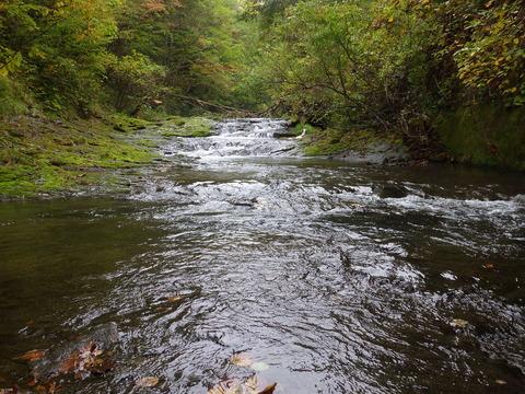 渓流の水面は美しい