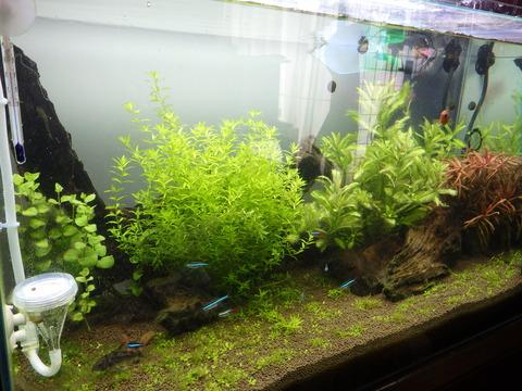 水草も成長してきました