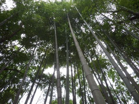 立派な竹林ですね