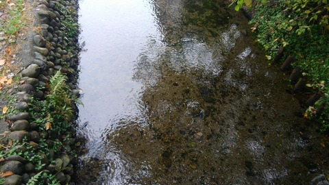 きれいな小川が流れていました