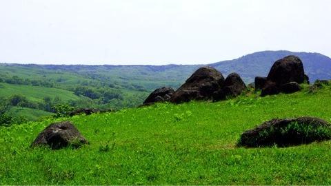 緑の草原に点在する岩イメージ