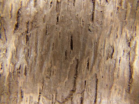 タッチアップ1回目の木の表層