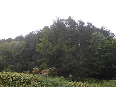 今日も雨が降っている