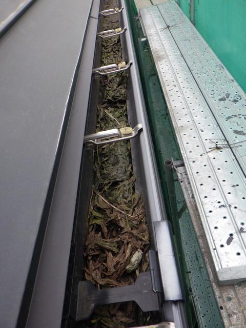 横樋に落ち葉が溜まっている