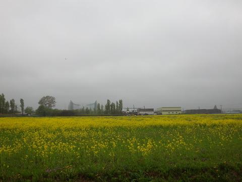 札幌の春も雨が多くなったように感じる今日この頃