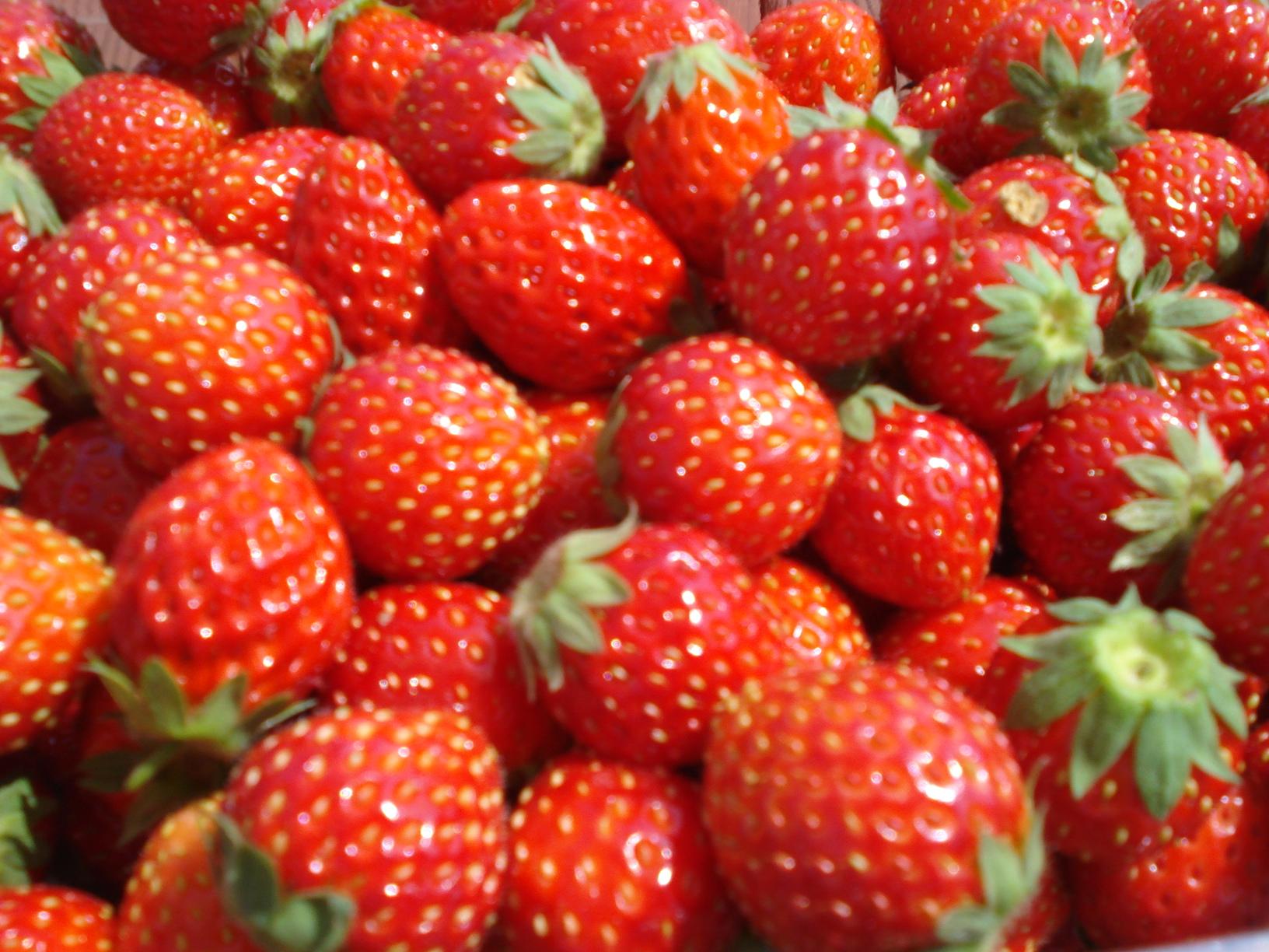 イチゴの画像 p1_14