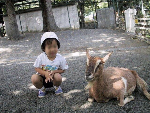 動物園駿山羊22