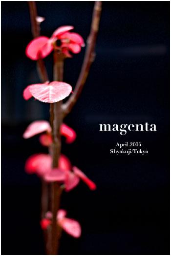 magenta
