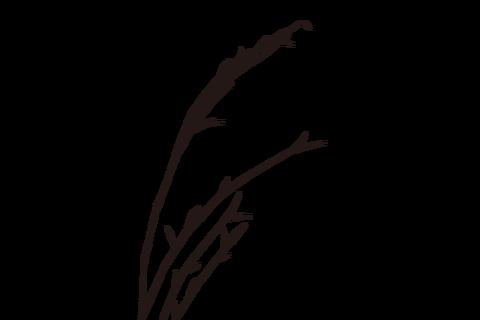reaf002B