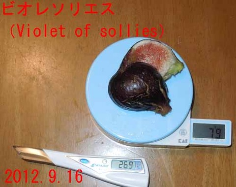 sollies01)