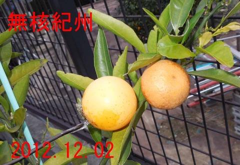 12kisyu12-1
