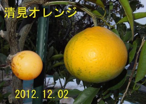 12kiyomi12-1