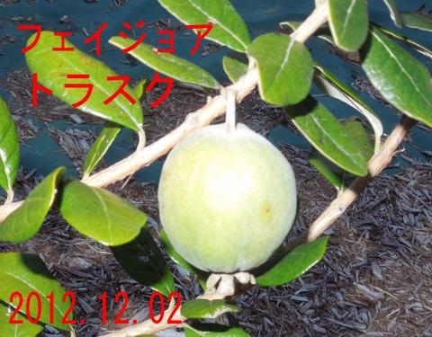 12torasuku12-1