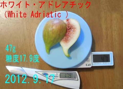White Adriatic02