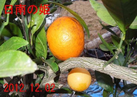 12hinano21-1