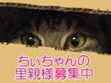 chi-banner
