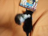 猫ファイト