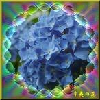 29辛夷の花