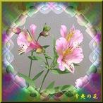 30辛夷の花