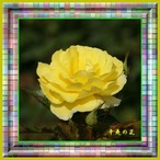13辛夷の花