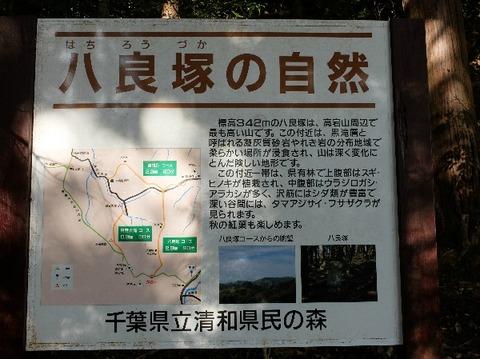 16_千葉自然学校_高宕山-高宕観音_2017-11-12_ipi_DSCF2641