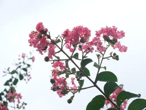 61_中山法華経寺_ipi_2019-09-14_DSCF7273
