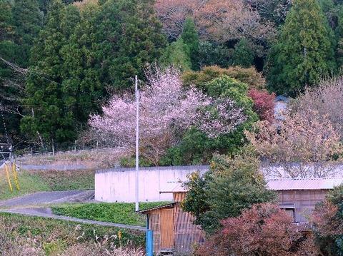 16_千葉自然学校_高宕山-高宕観音_2017-11-12_ipi_DSCF2522