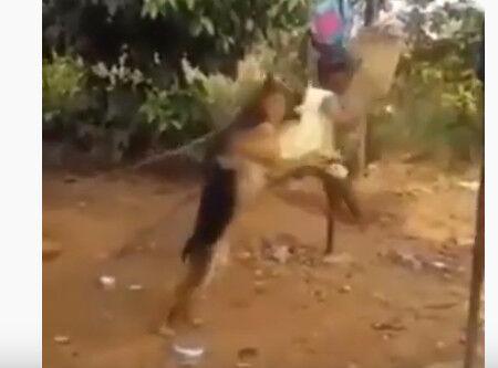 000001.まるで家族!!ブランコを押す犬