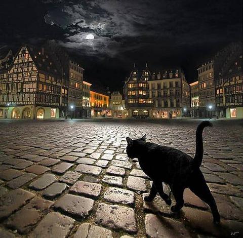 cat00703
