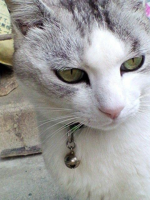 cat00669