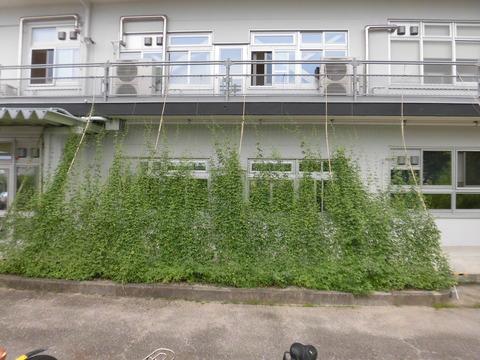 続・緑のカーテン2