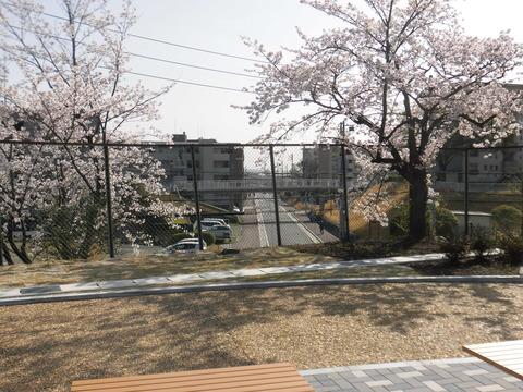 【20210331清水】日よけと春の景色2