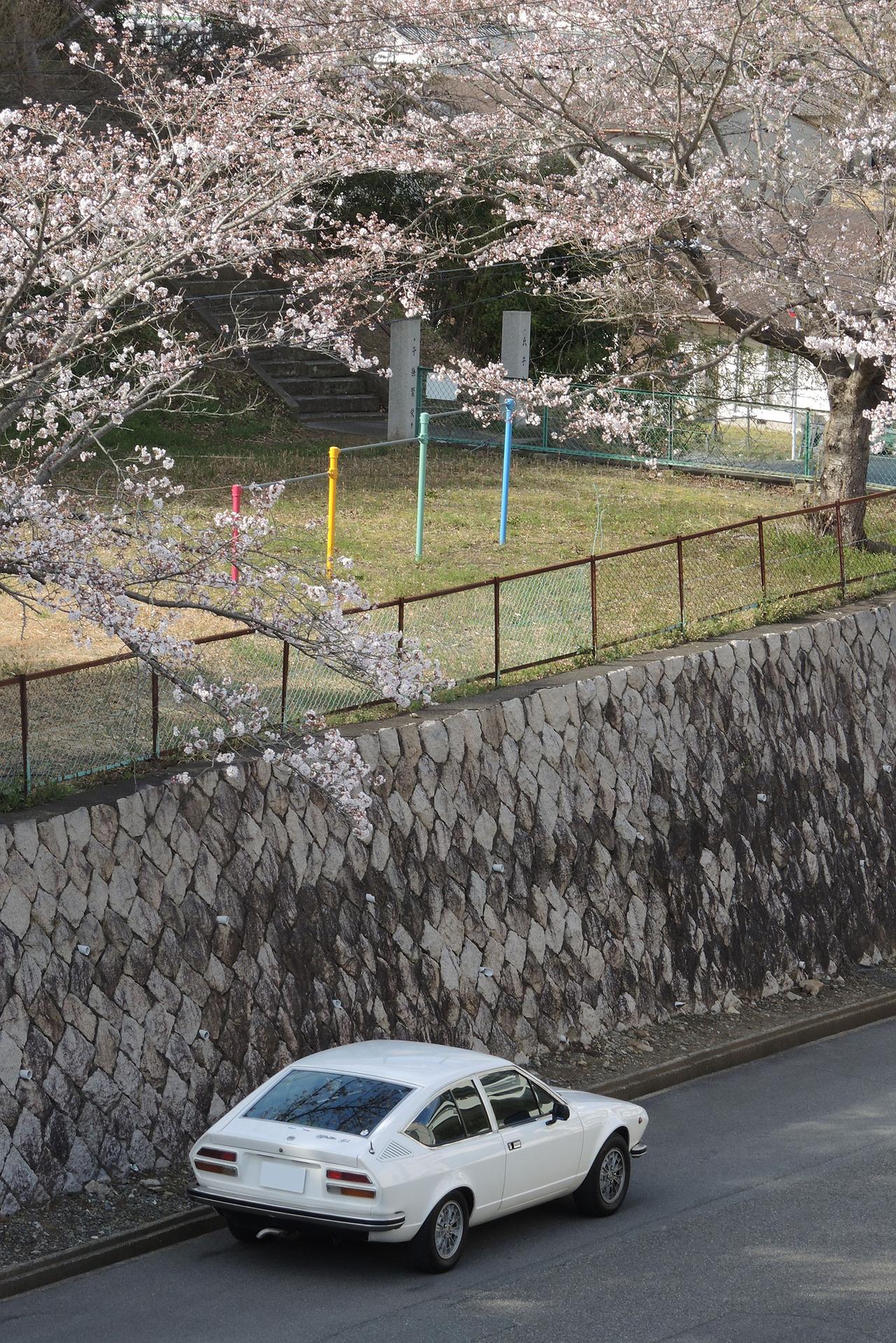 170410桜6分咲き2