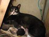 guam3.19cats