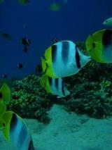guam12.18fish