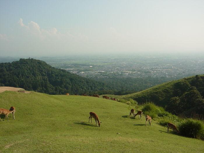 GUIA DE JAPONMonte Wakakusa - Nara 若草山コメント