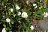 庭の花 #1